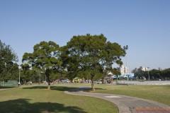 中央政府定位林口朝「生態城市」發展