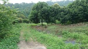 新社古堡農場用地使用2500坪